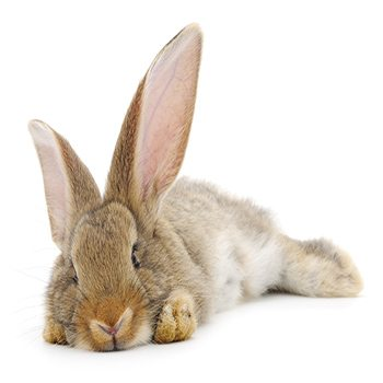 Can Your Pet Rabbit be Litter Trained?