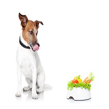 Getting your Dog to Eat Raw Fresh Vegetables