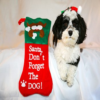 Give Your Pet the Best Christmas Ever!