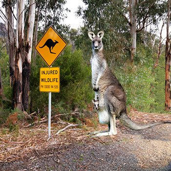Helping Reduce the Road Toll for Australian Wildlife