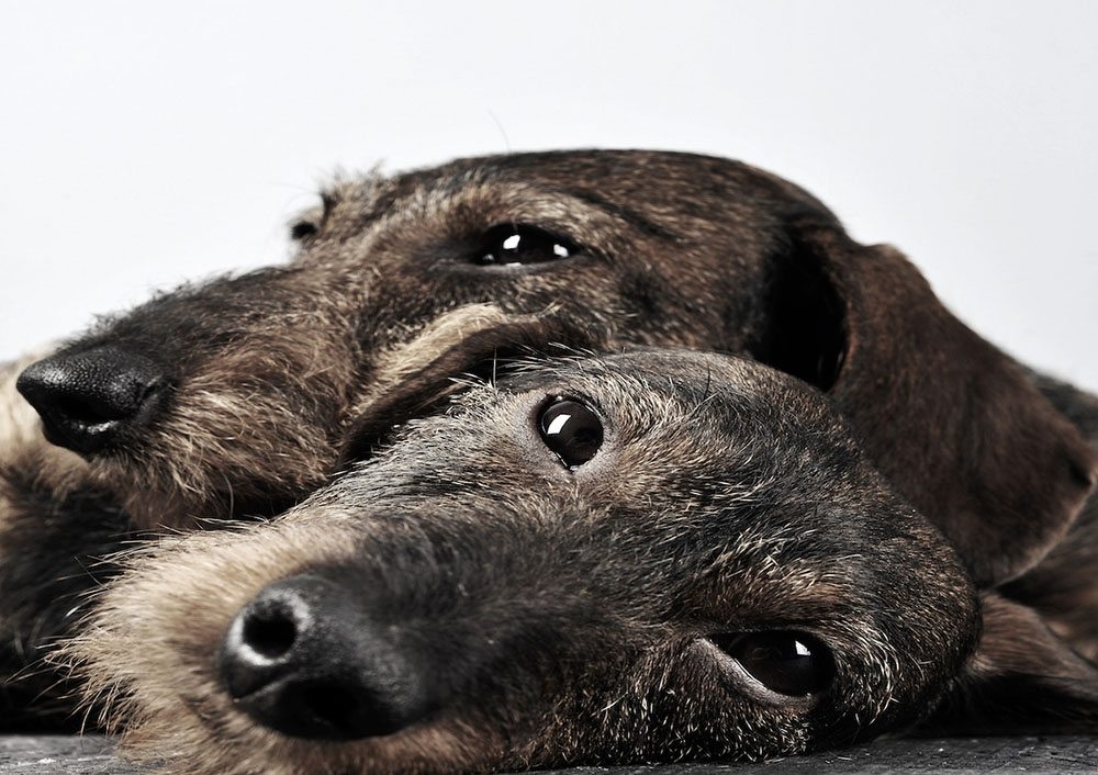 How will your dog survive without its best mate?