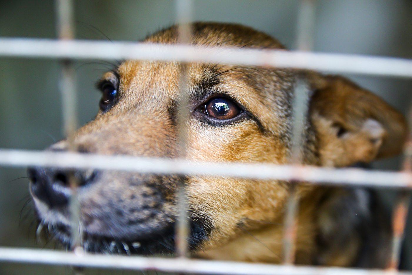 Animal Carers suffer Compassion Fatigue
