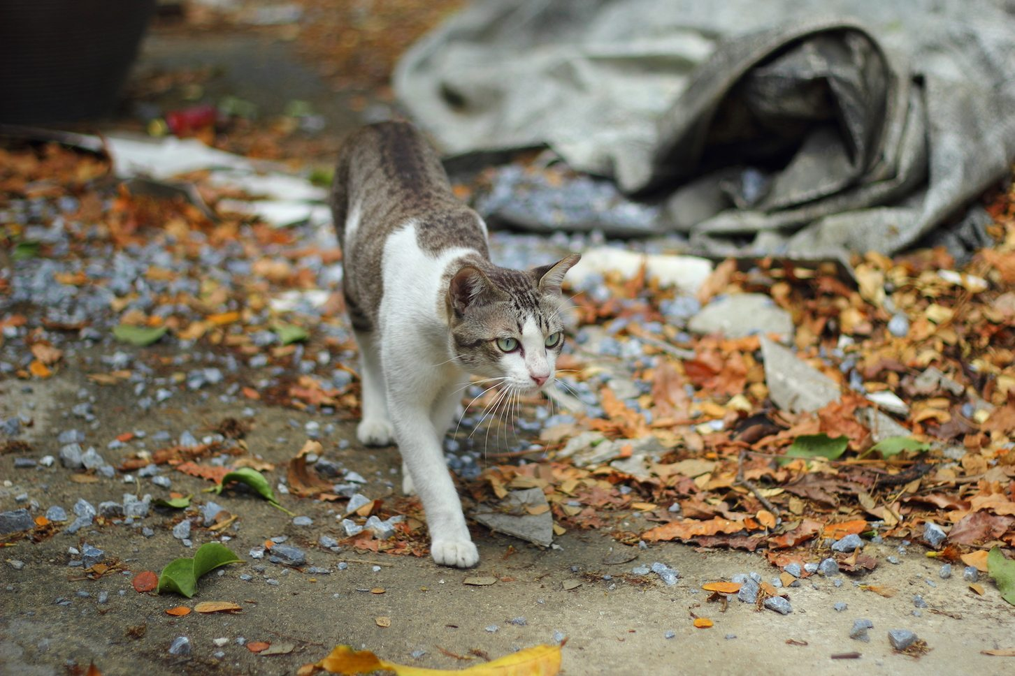 Preventing Pet Cats from Roaming.
