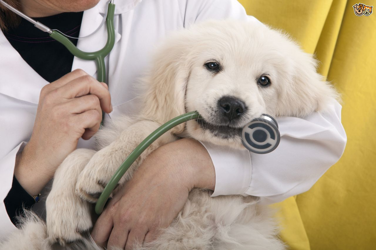 Do I need to vaccinate my dog and cat every year?