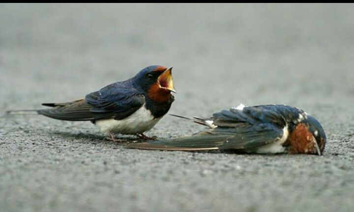 Birds Mourning Partner Animal Talk
