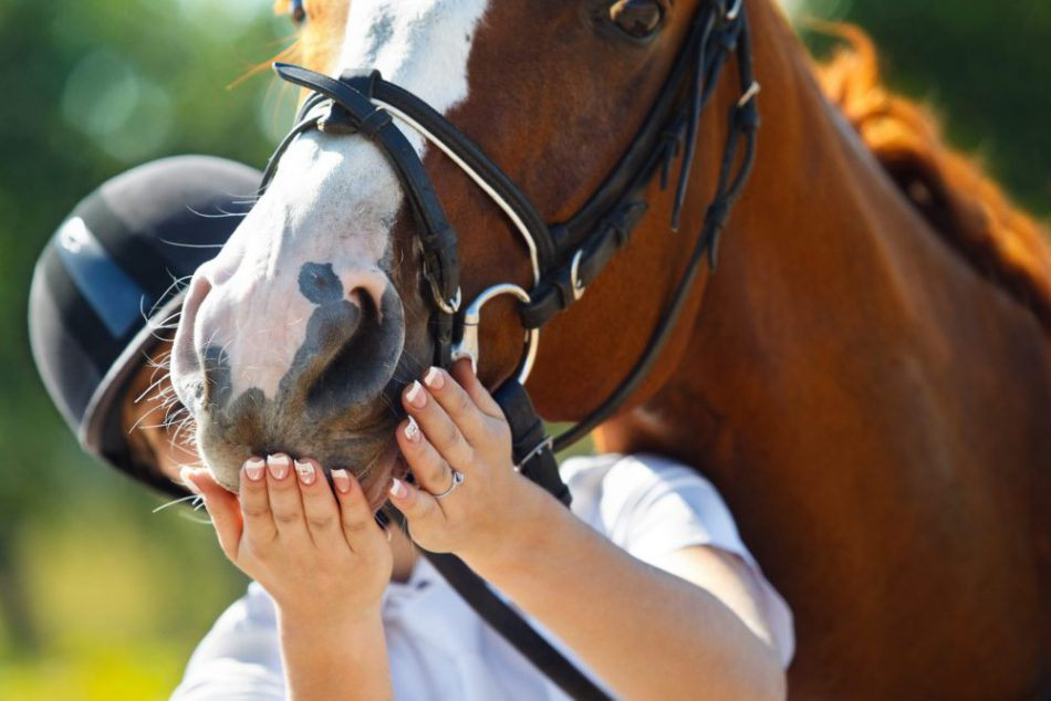 The Secrets to Successful Riding with Your Horse