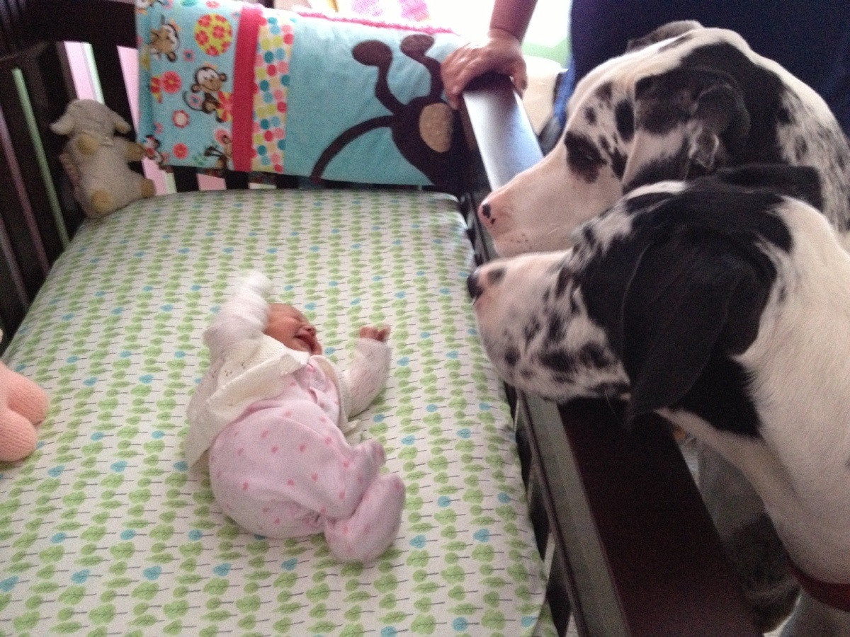 How To Prepare Your Animals for A New Baby Arrival