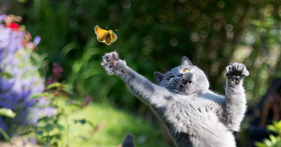 Which Insects Are Safe For Your Cat?