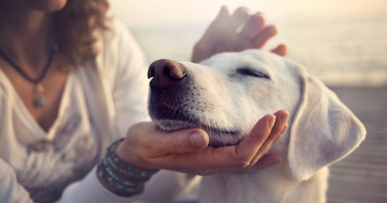 What Type Of Healing Does Your Animal Need?