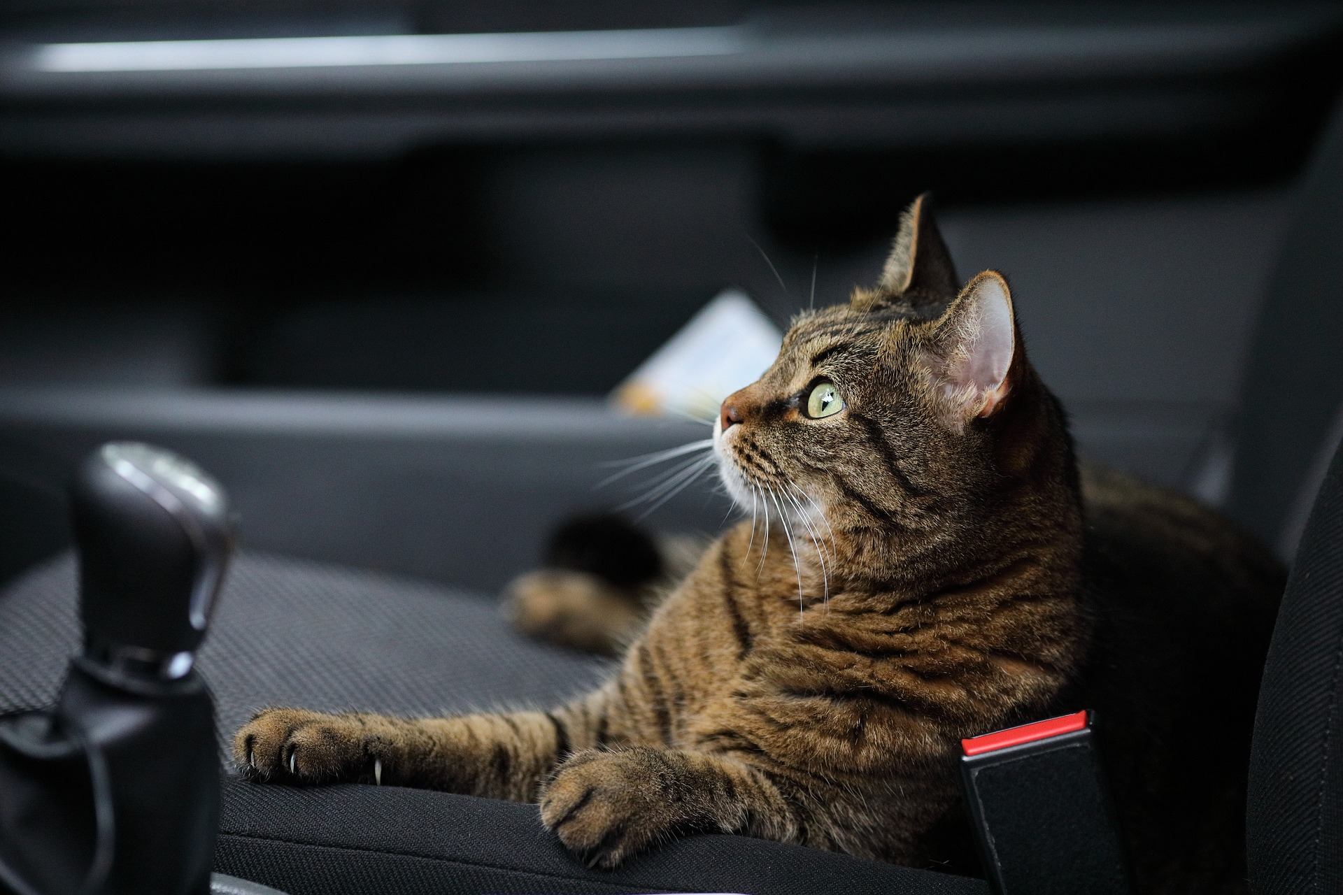 Preparing Your Cat For Car Travel