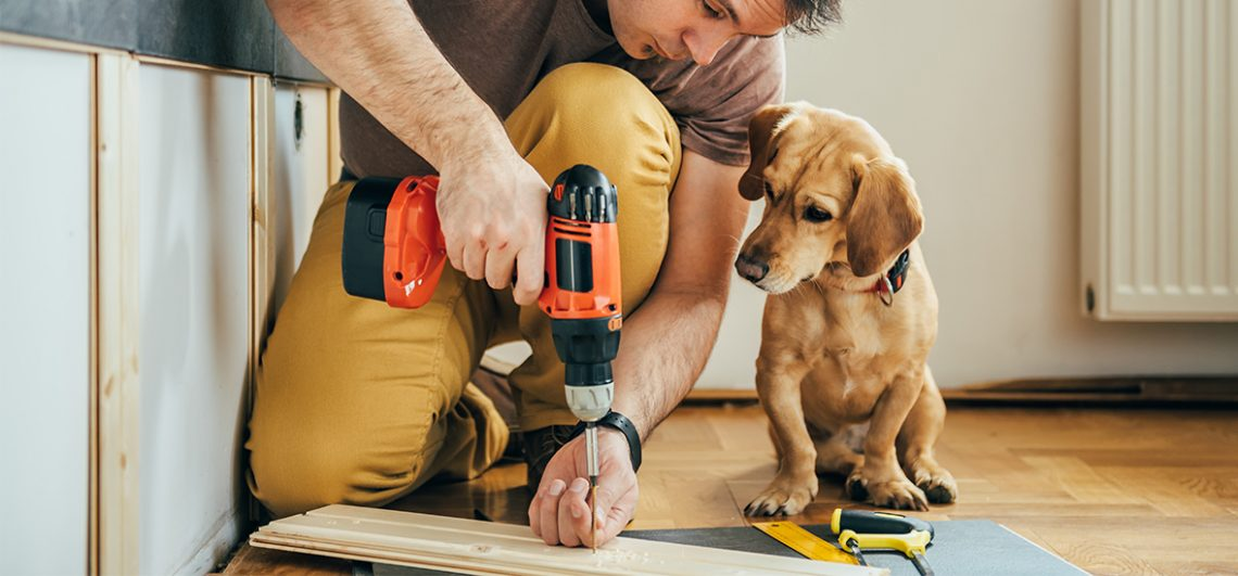 Preparing Your Pets For Home Renovations