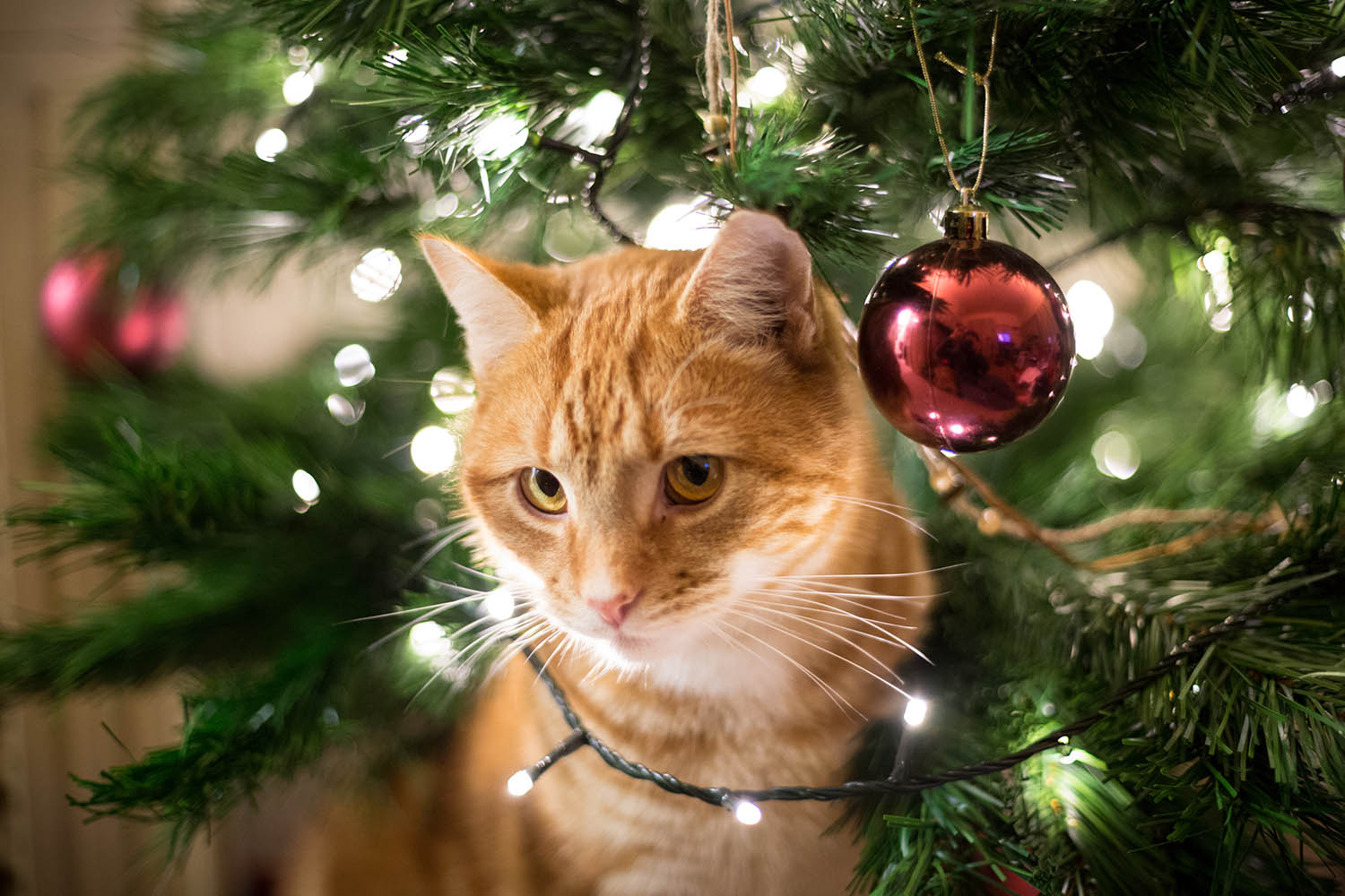 Create the Ultimate Christmas Tree for Your Cats